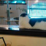 初潜入!保護猫カフェ