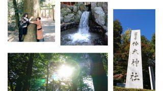 神様に出会う旅 -椿大神社ツアー-